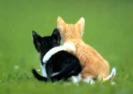 タジ猫ミハ猫
